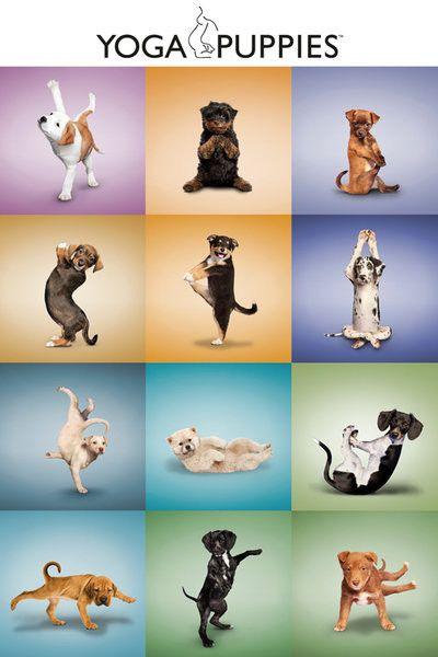 Yoga - Puppies Grid Poster  07df446544d78