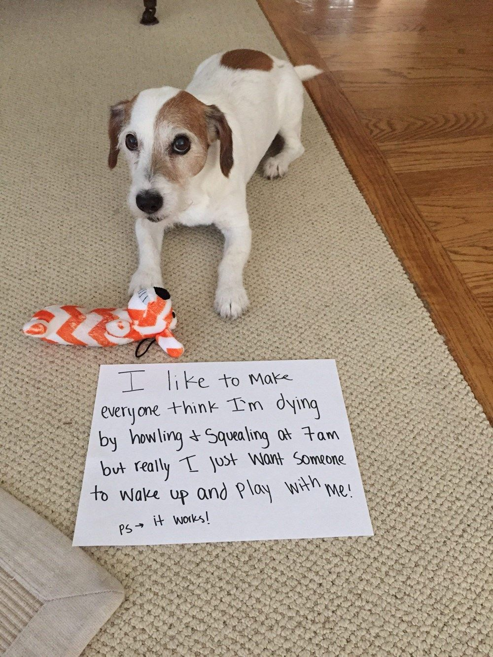 30 Of the Best Dog Shaming Photos From 2017 - I Can Has Cheezburger?