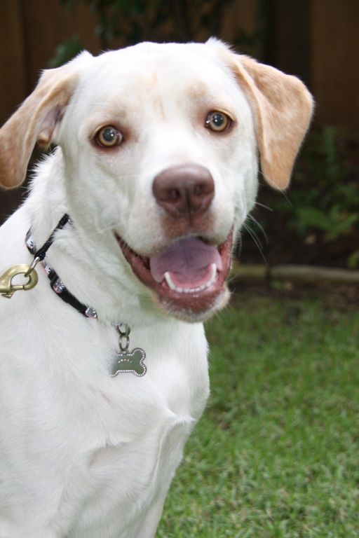 White As Snow With Eyes That Glow Cricket Flinn Obedience Boarding