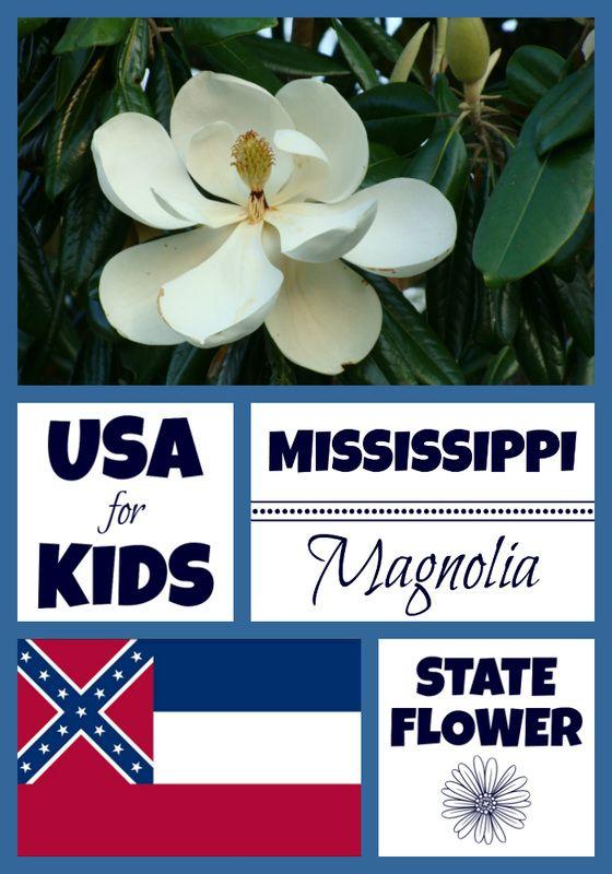 Mississippi State Flower - Magnolia by | Pinterest | Mississippi ...