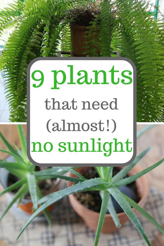 No Sunlight Plants Indoor Garden Gardening Herb Ideas