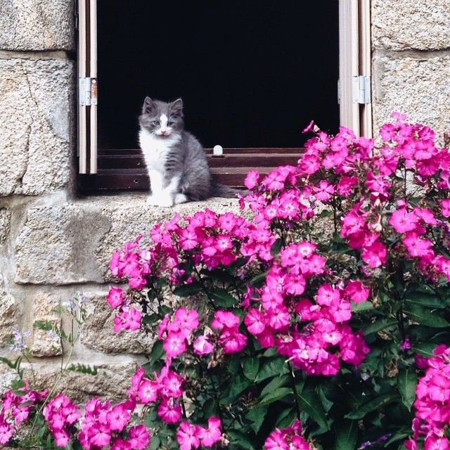 cat-in-windows:  france (via @gabrielavs | Websta)