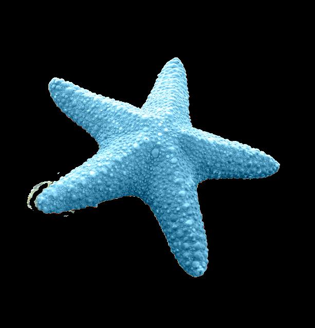 Starfish Sea Clip Art Starfish Transparent Png Image Lucu