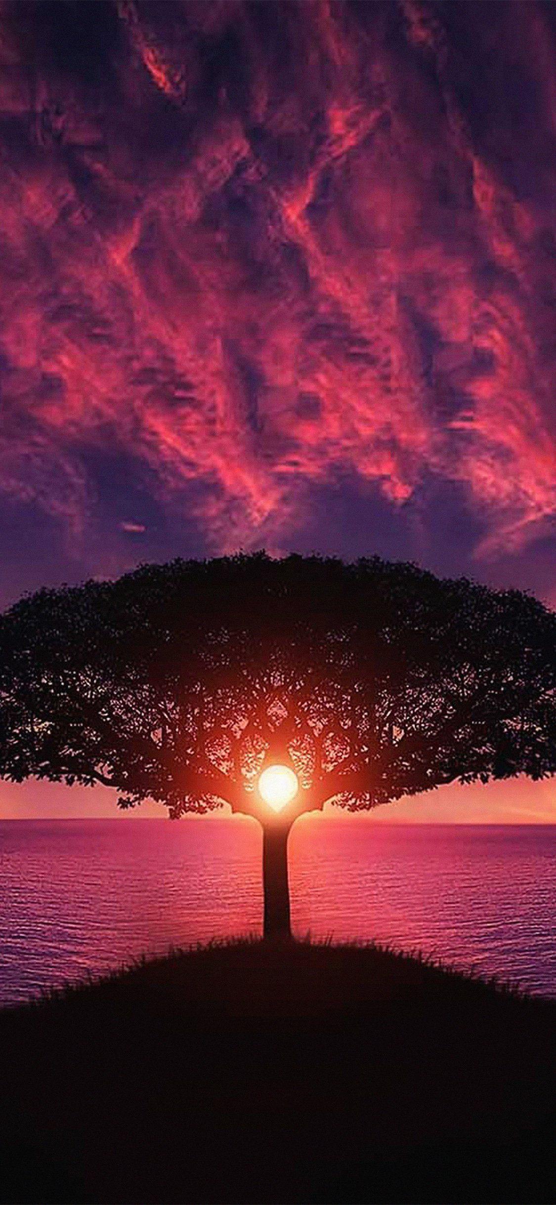 Sea Tree Purple Sky Iphone X Lindas Paisagens Imagens Natureza Fotografia De Paisagem