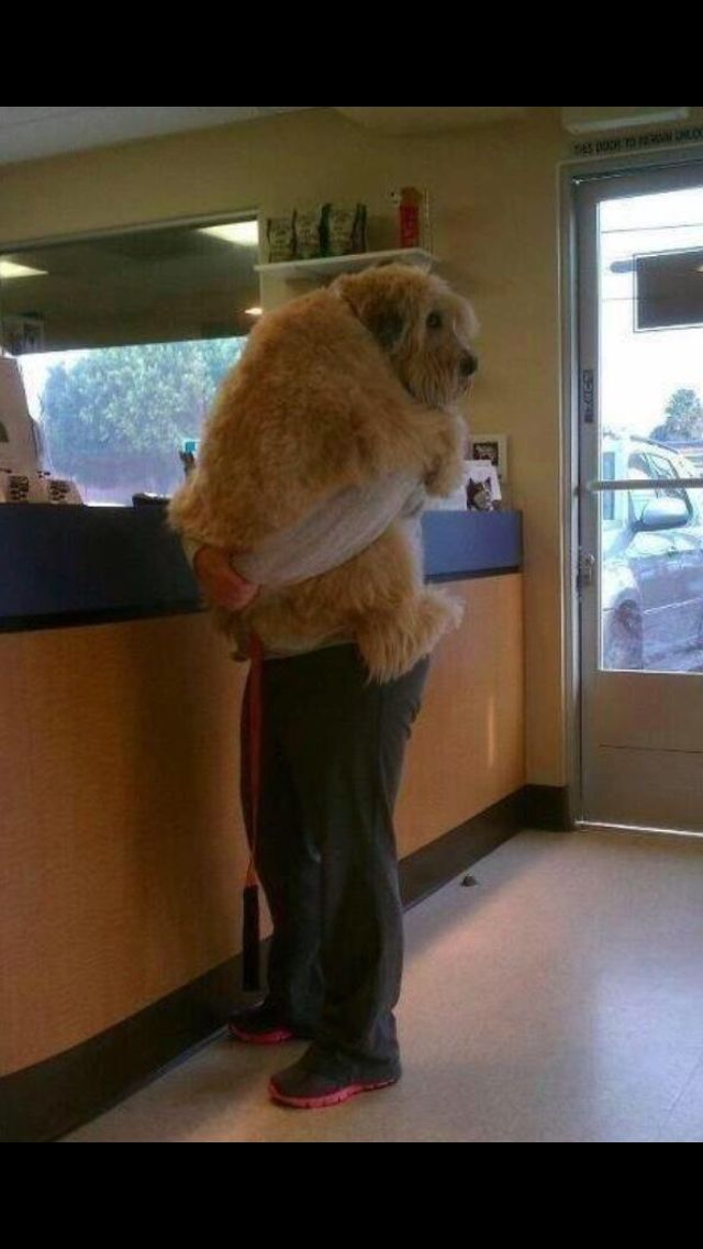 stage 5 clinger baby