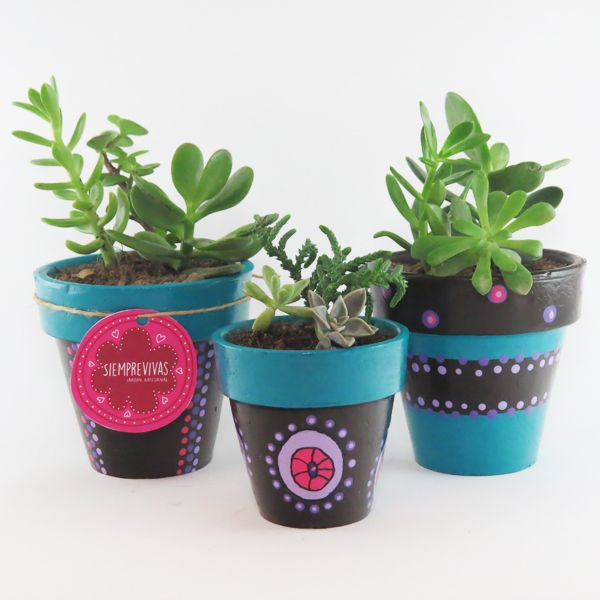 Set Siemprevivas Mini Jardines Pinterest
