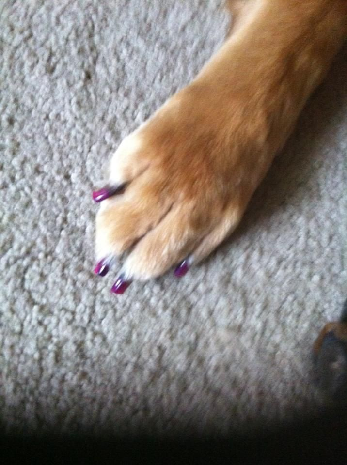 Dog S Manicure Pedicure Dogs Mutts Pinterest Dogs Love You