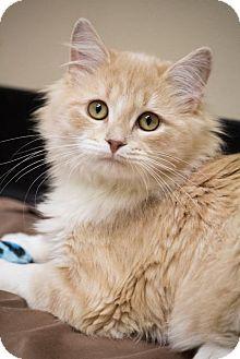 Pin On Adoptable Pets Five O Clock Cuteness