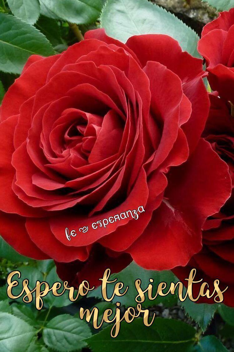 Flowers image by Fє ಌ єรρєяαɳzα on Que te mejores Plants