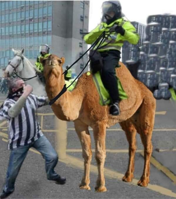 But are memes more than just funny images and sarcastic text? Iconic . . . . . . nufc newcastle united newcastleunited ...