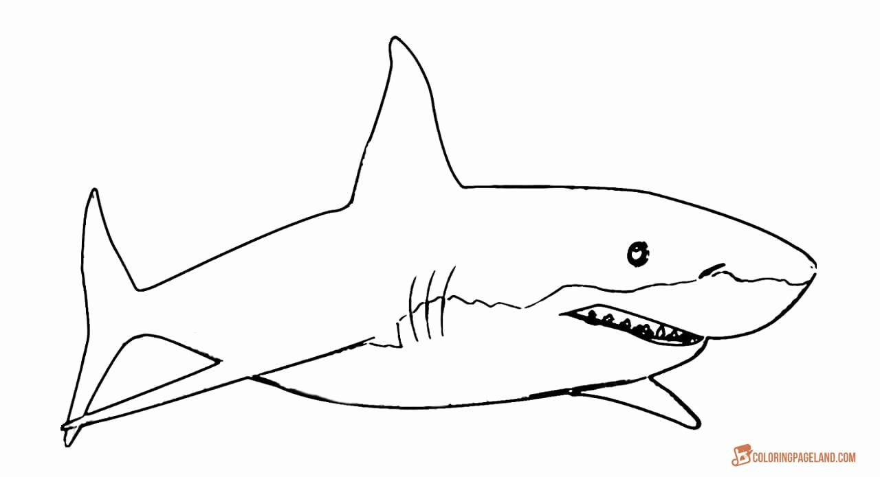 Great White Shark Coloring Page Lovely Great White Shark Coloring Pages Downloadable And Shark Coloring Pages Coloring Pages Fox Coloring Page