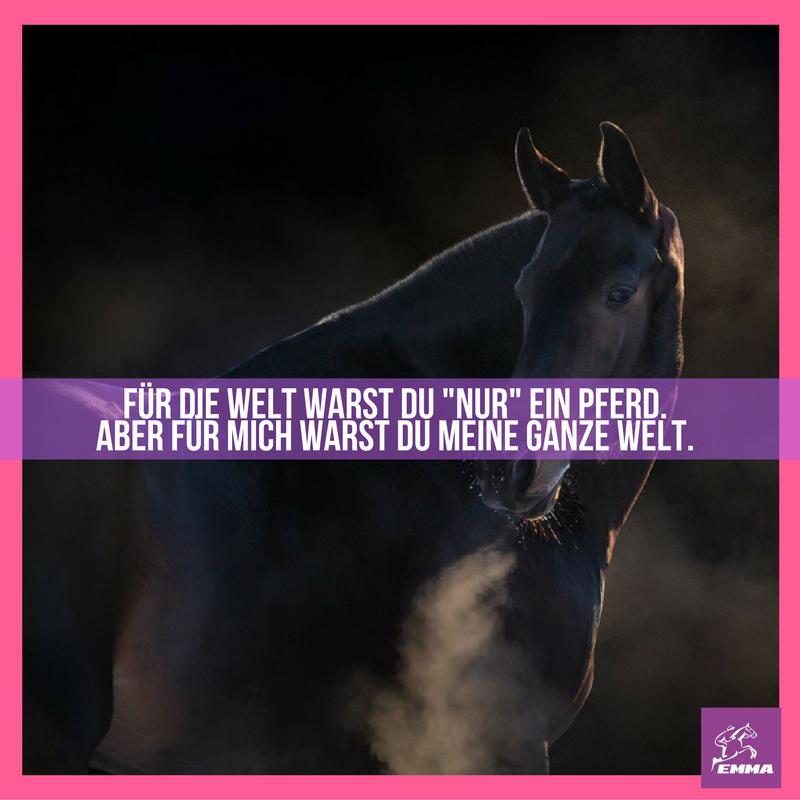 Pferd Vermissen Sprüche