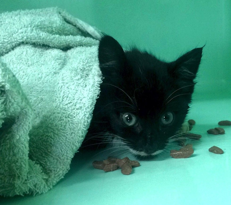 Kitten Brought In Completely Lifeless After 3 Hours Of Dripping Fluids And Care Kittens Little Kittens Fur Babies