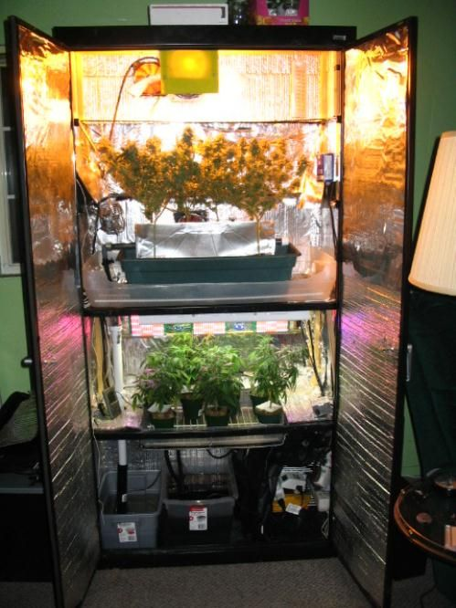 Looking for space saving way to garden indoors? Hydroponic grow tents is the solution. : 4x4 grow tent kit - memphite.com