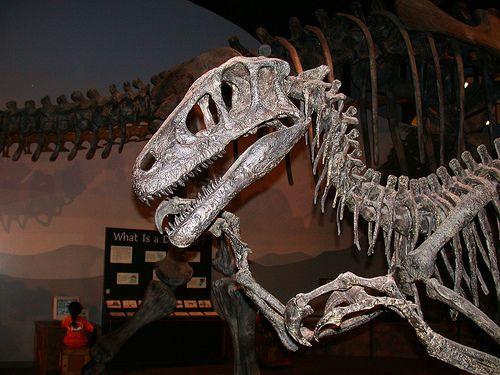 33++ Utahraptor skull info