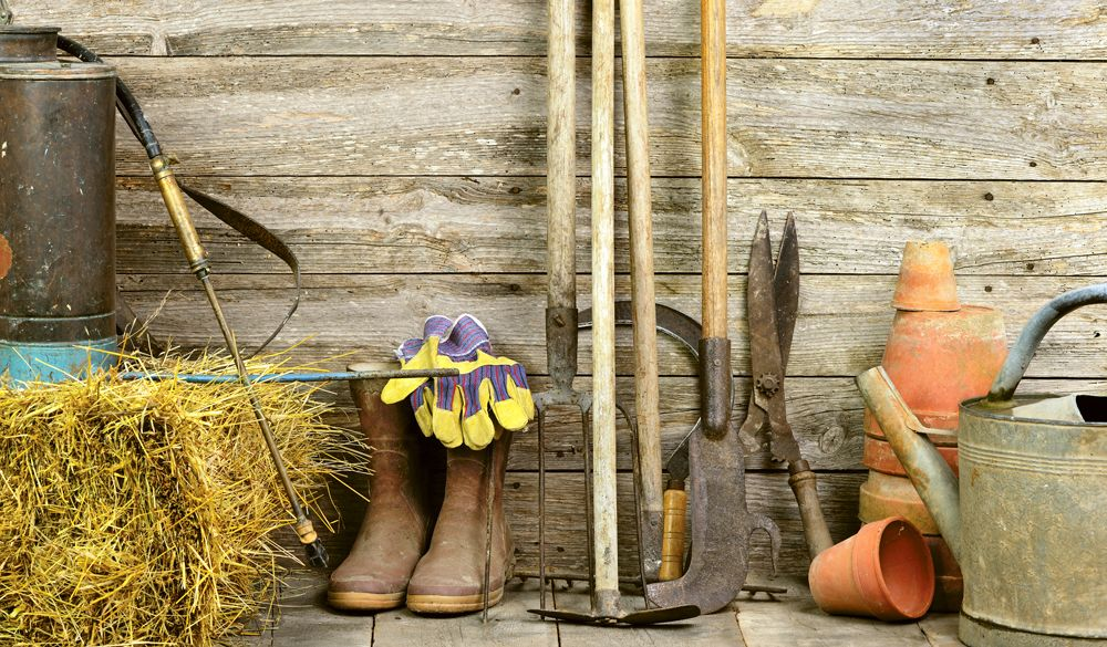 Just some of the tools you may need when growing your own veg #expertadvice