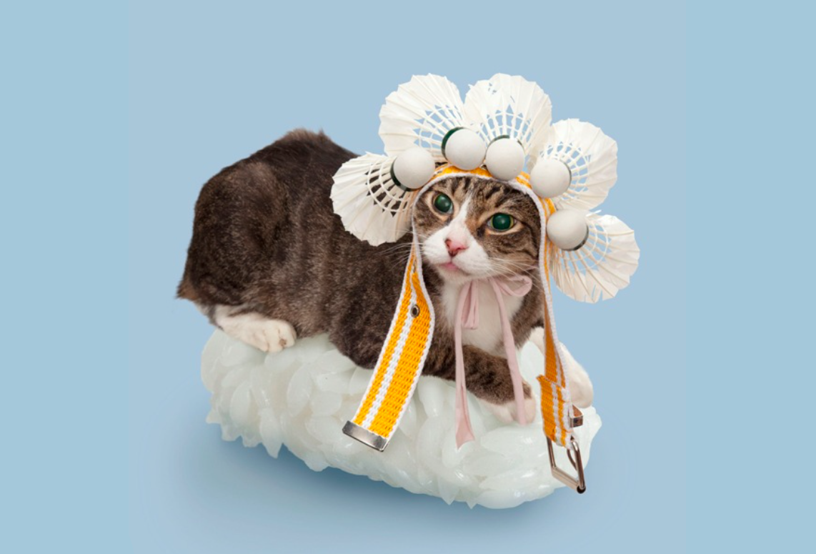 Cats Dressed as Sushi Rolls.