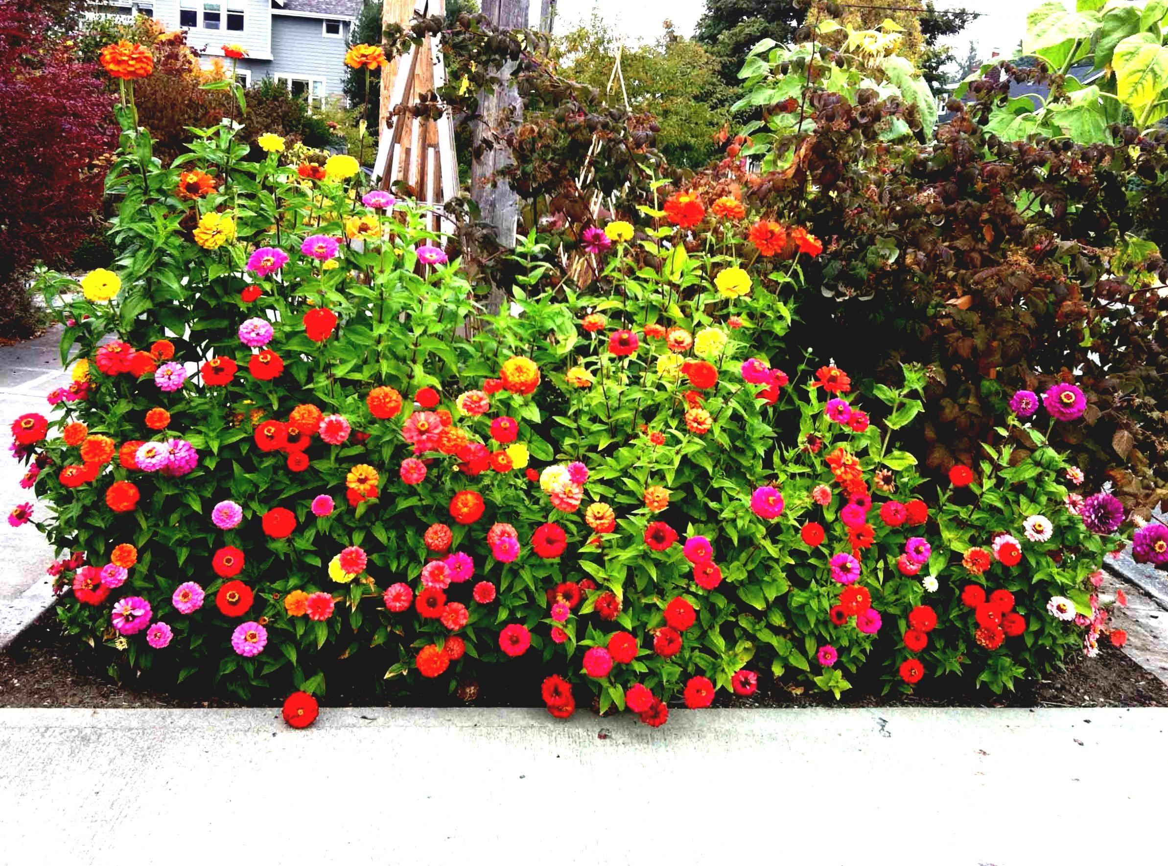 Dise o de jardines peque os y modernos el espacio no debe for 40 nuevos disenos de pequenos jardines