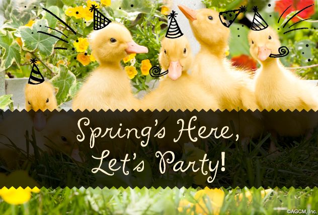 Happy First Day Of Spring   American Greetings Blog