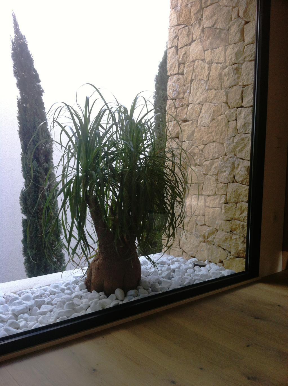 Imagen de nolina ubicada en jardinera exterior de bolo - Centros de jardineria madrid ...