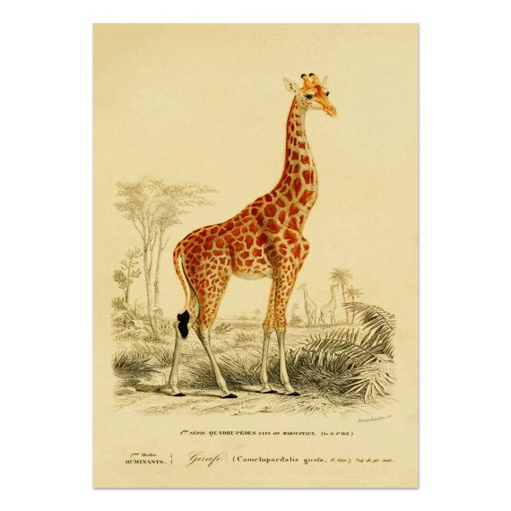 Giraffe Poster Giraffe Art Print Savanna Animals Animal