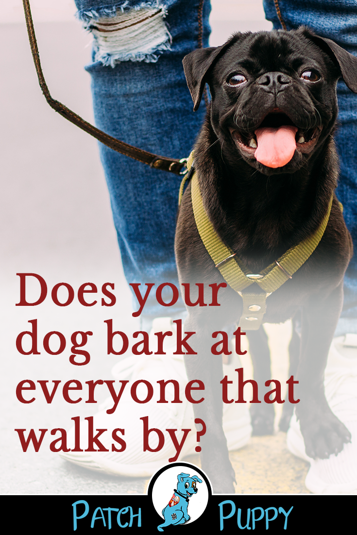 How To Get An Anxious Dog To Stop Barking