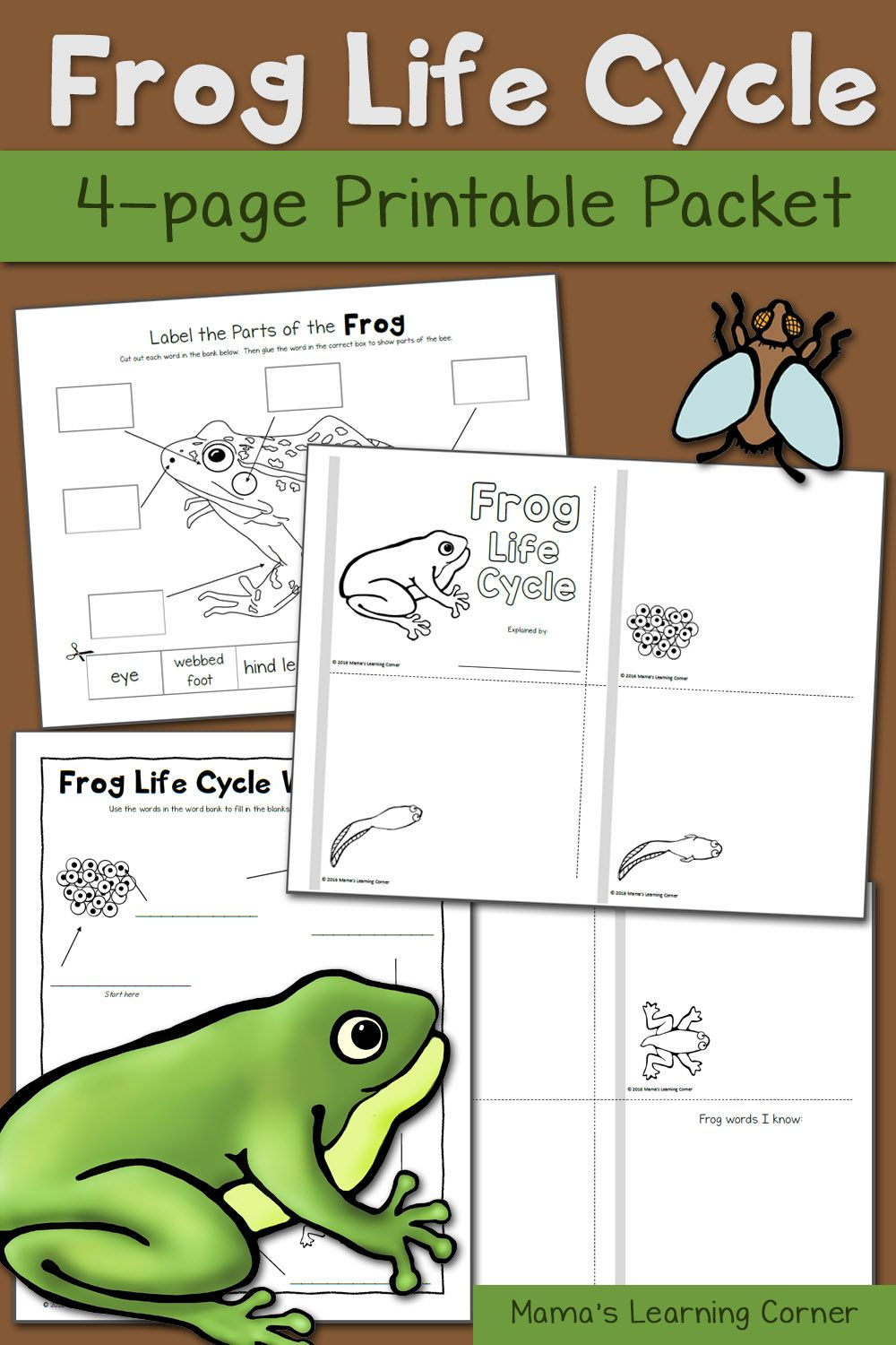 Worksheets Frog Life Cycle Worksheet frog life cycle worksheets pinterest cycles frogs and spring is the perfect time to study dont you think theres something about newness it brings that make