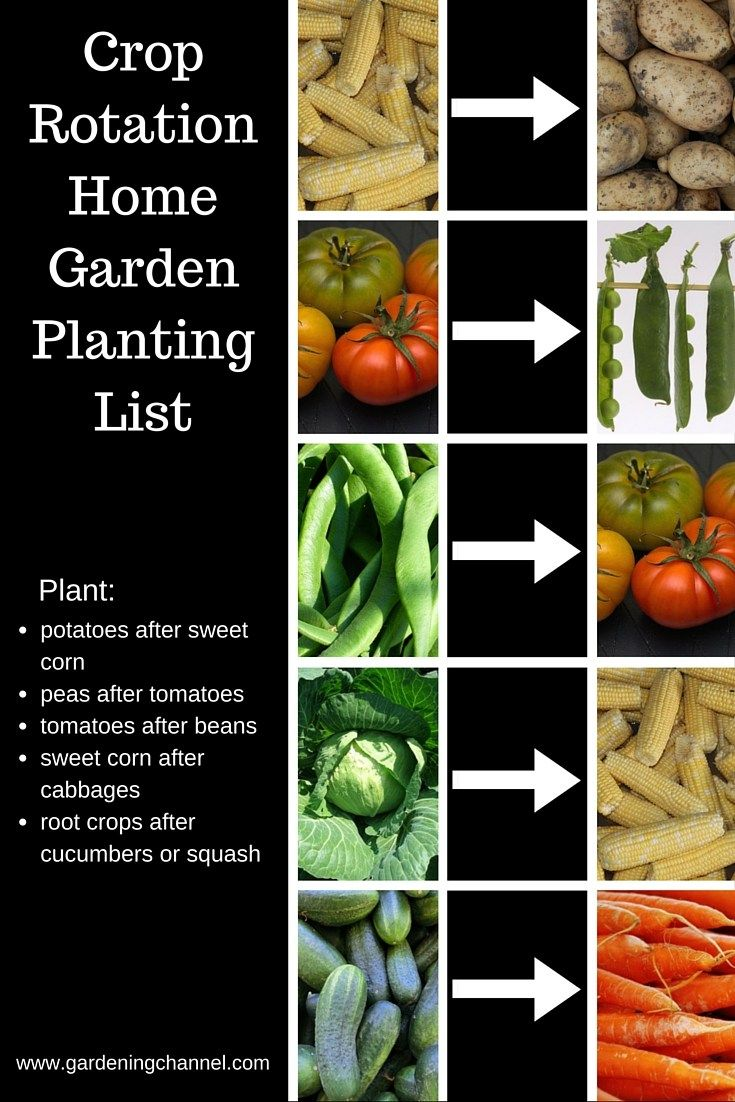 Good Crop Rotation Partners Quick Reference List Crop Rotation Vegetable Garden Tips Kinds Of Vegetables