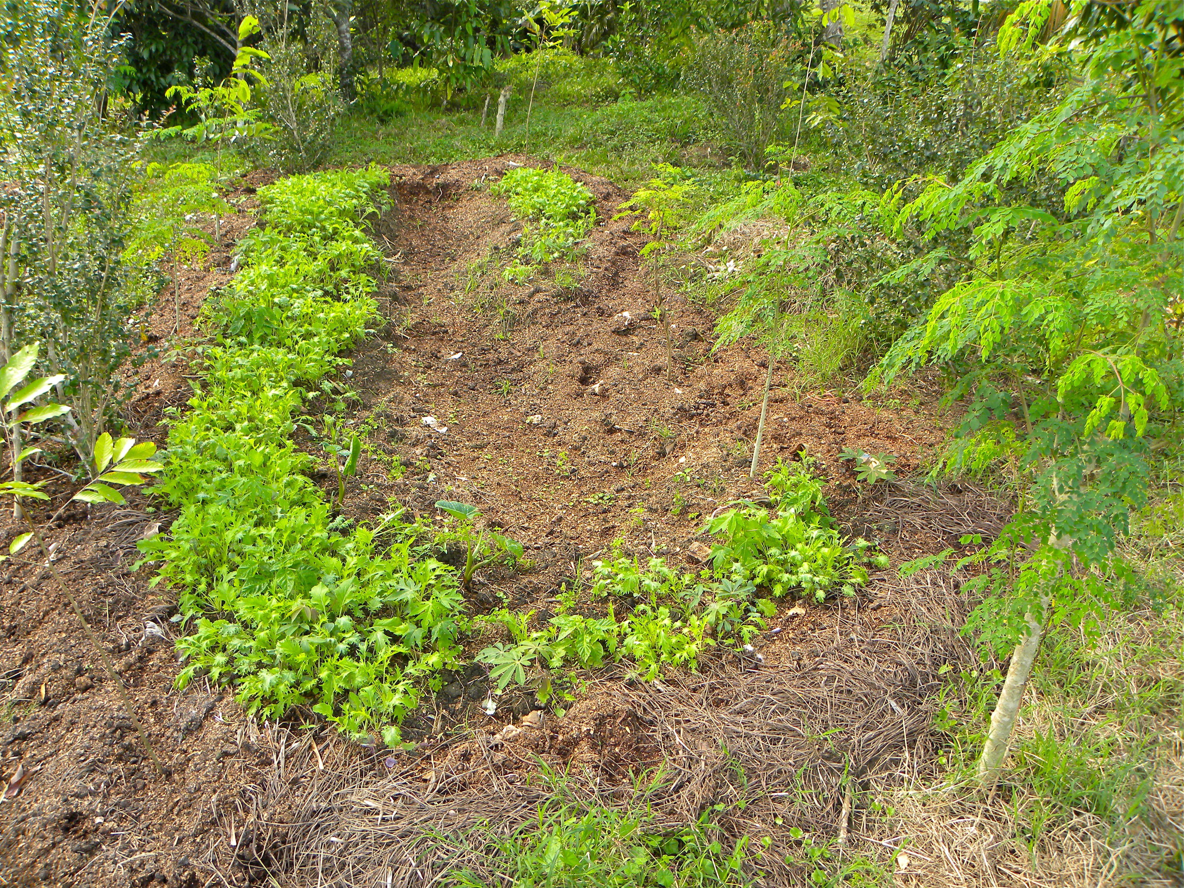 Soil Building Techniques Part 1 | Sloped garden ...