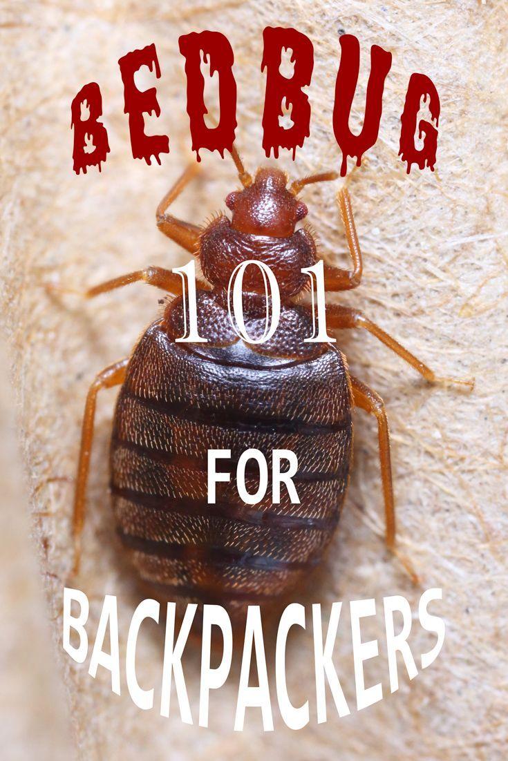 8486d0ce8f64294595ef87ffbe83c5c1 - How To Get Rid Of Bed Bugs While Backpacking