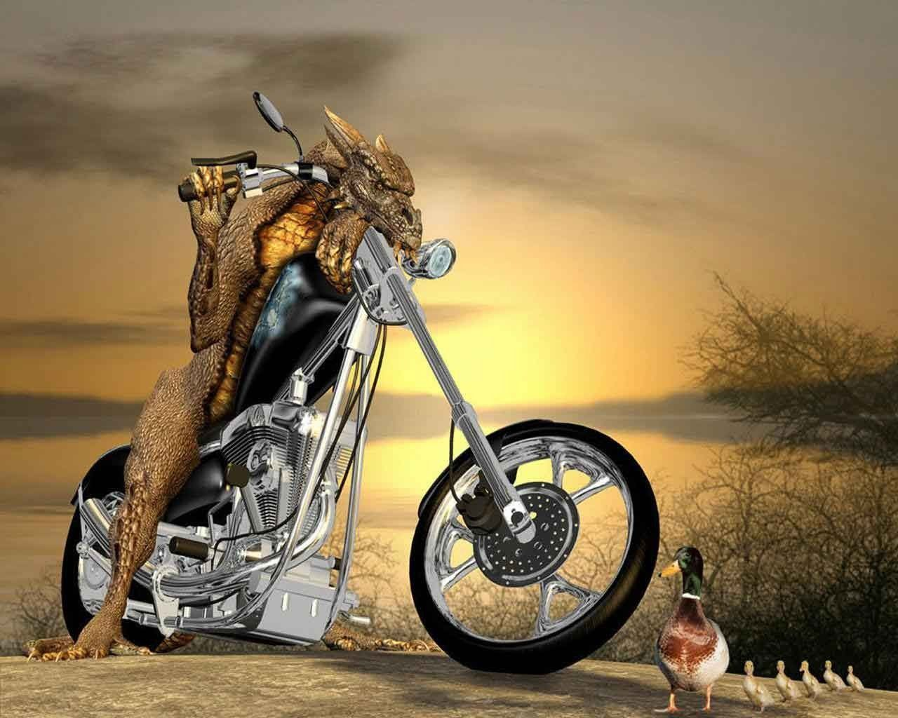 animal bmx wallpaper - photo #42