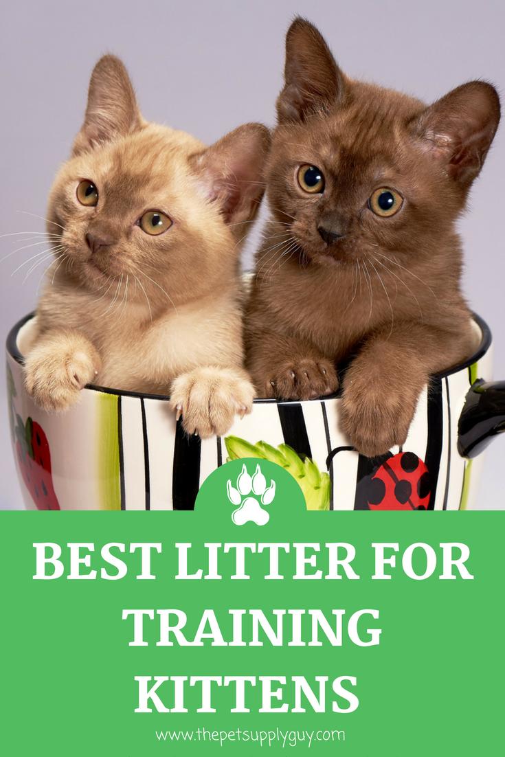 Best Litter for Training Kittens Cat facts, Cat behavior