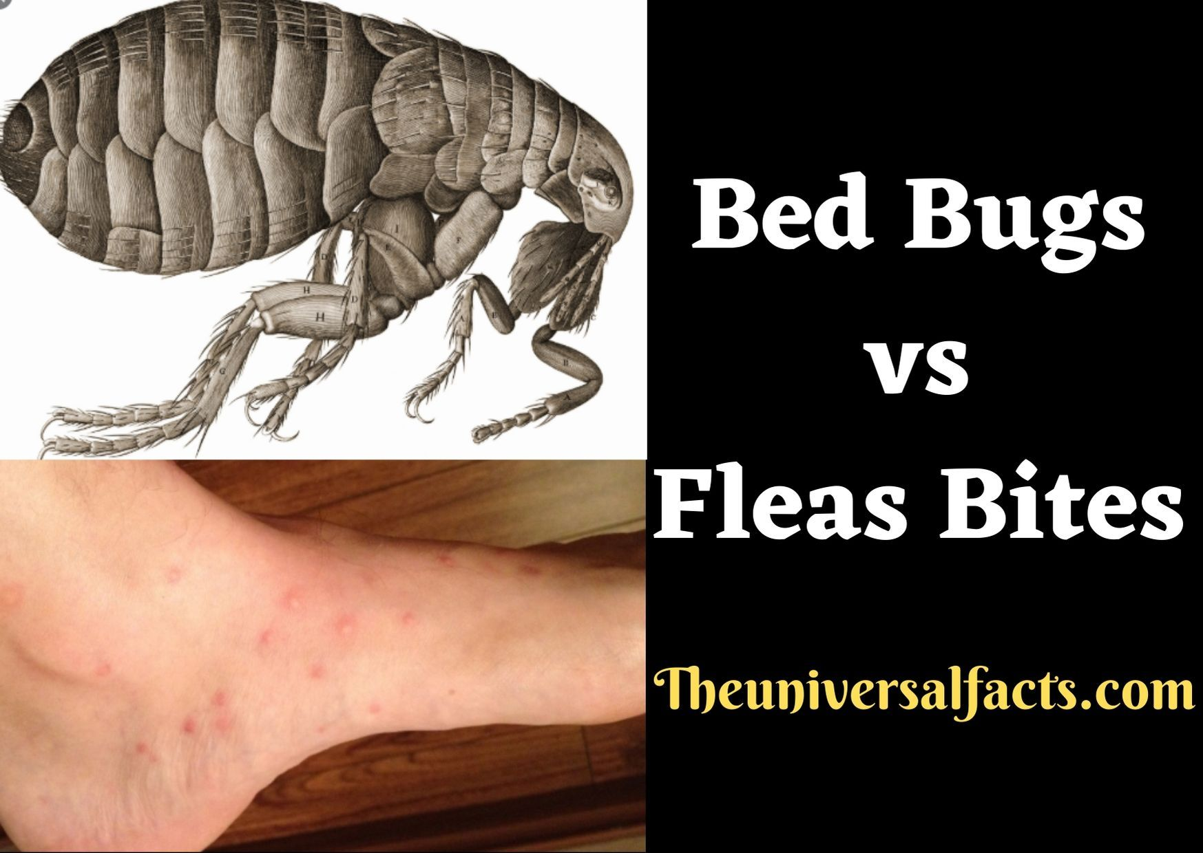 Bed bug identification chart Want to know if you have