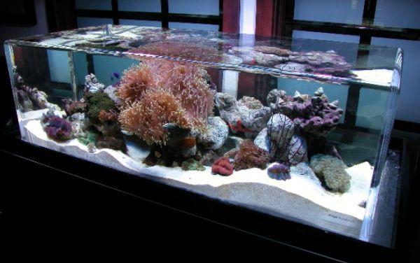 28 Modern Fish Tanks That Inspire Relaxation Acuario, Peceras y Marino