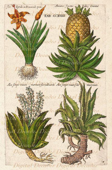 Tropical Garden Flower Plants Pineapple Aloe By DigitaIDecades