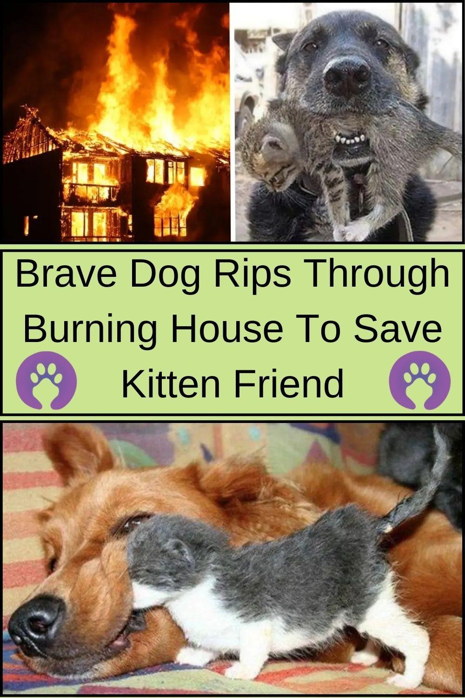 Brave Dog Rips Through Burning House To Save Kitten Friend In 2020 Dogs Animals Kitten