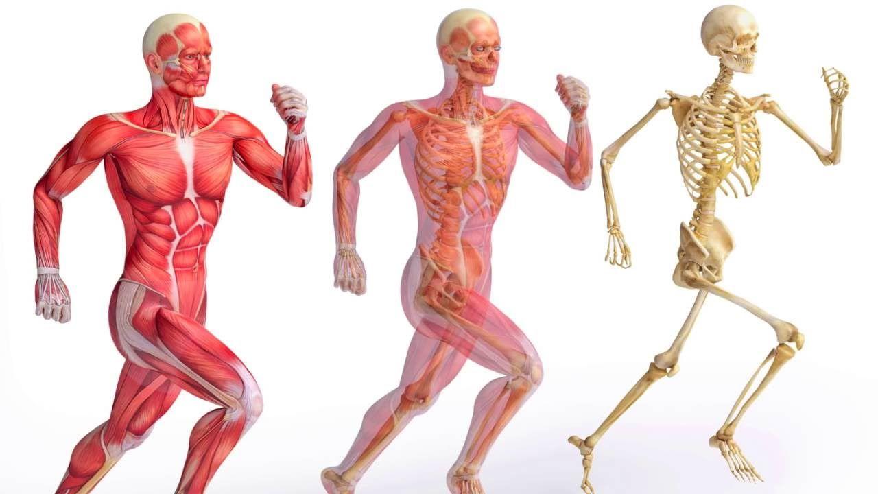 ما هو الجهاز الهيكلي ووظائفة موسوعة Musculoskeletal System Medical Terminology Medical