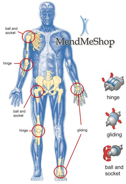 Joints Of The Body Jpg 435 633 Body Joints Human Joints Body