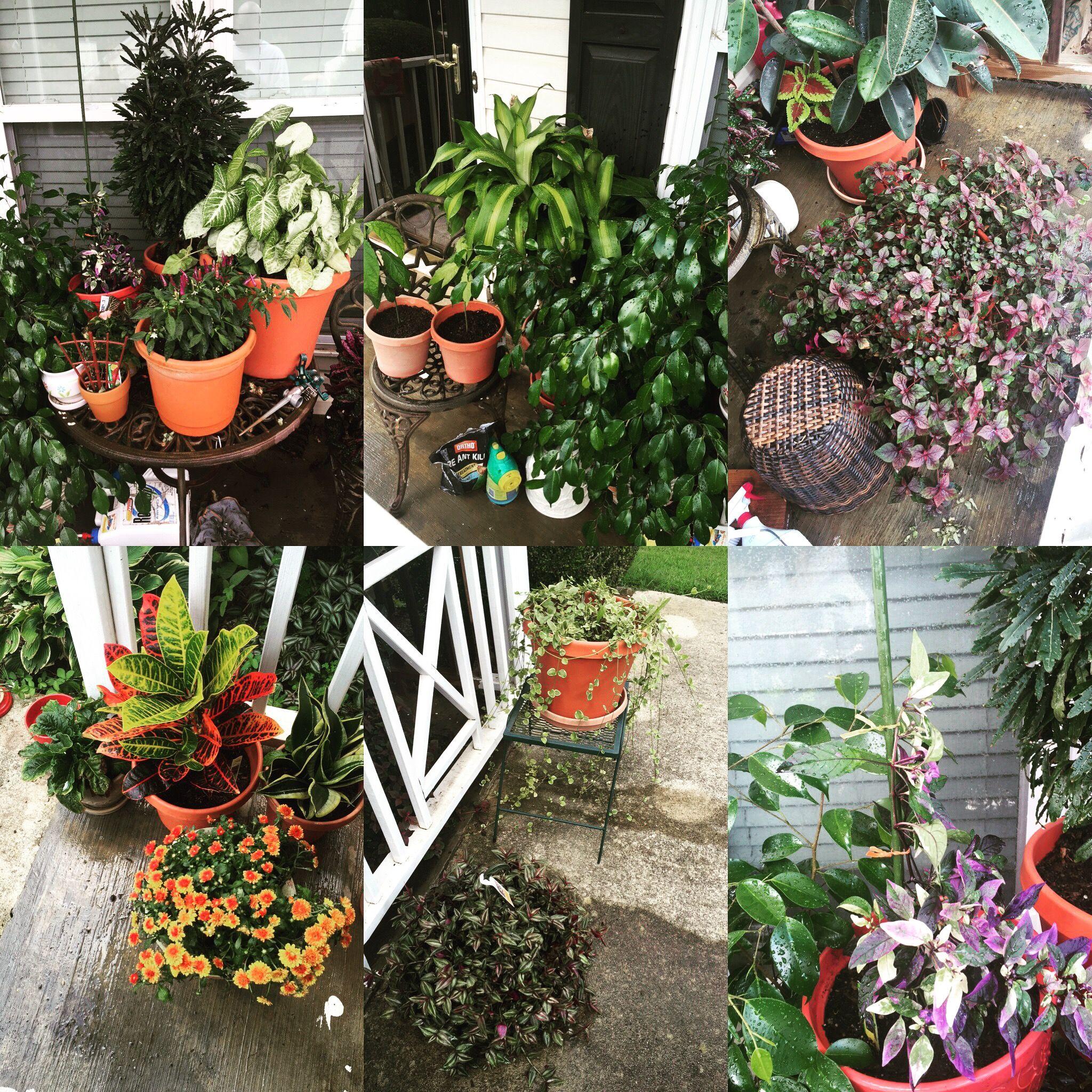 My personal hobby  Flowers  Pinterest  Flowers
