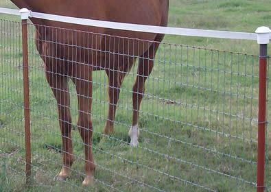 no climb horse fence   No climb horse fence protects horse and ...