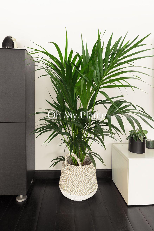Oh My Plante Plante Cache Pot Plante Verte