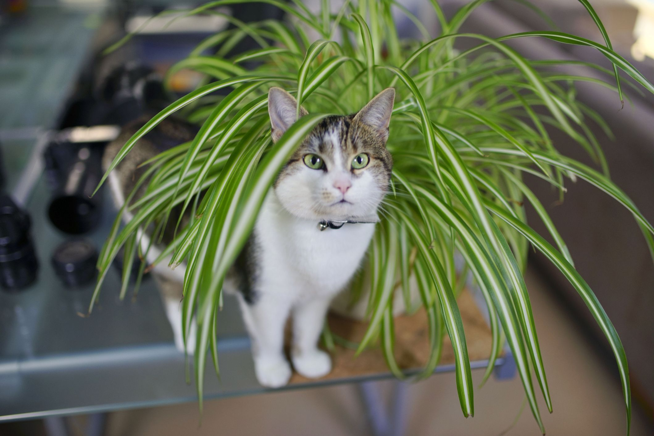 19 Pet Friendly Houseplants That Keep Cats And Dogs Safe Houseplants Safe For Cats Cat Safe Plants Low Light House Plants