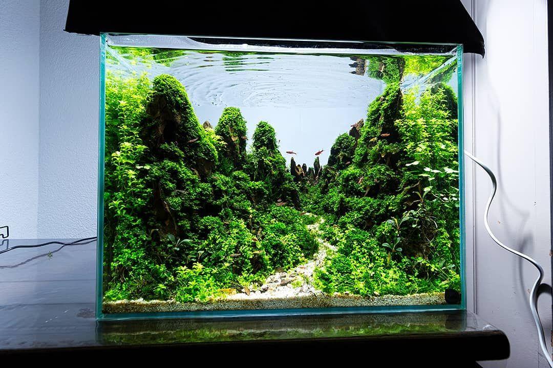 Aquarium Ideas Aquascape Design Freshwater Planted Tank Hardscape Aquarium Mountain Diorama Moss Shrimp Fish Aquasca Aquascape Design Aquascape Nature Aquarium
