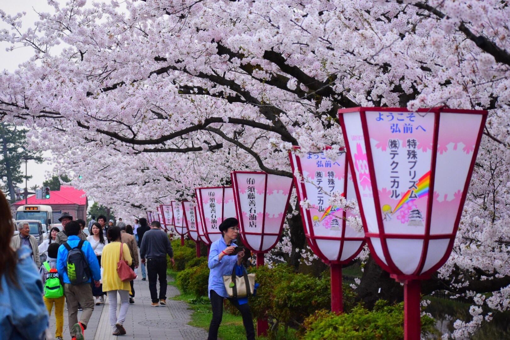 Hirosaki Cherry Blossom Festival 2018 Hirosaki Japan Cherry Blossom Festival Blossom Cherry Blossom