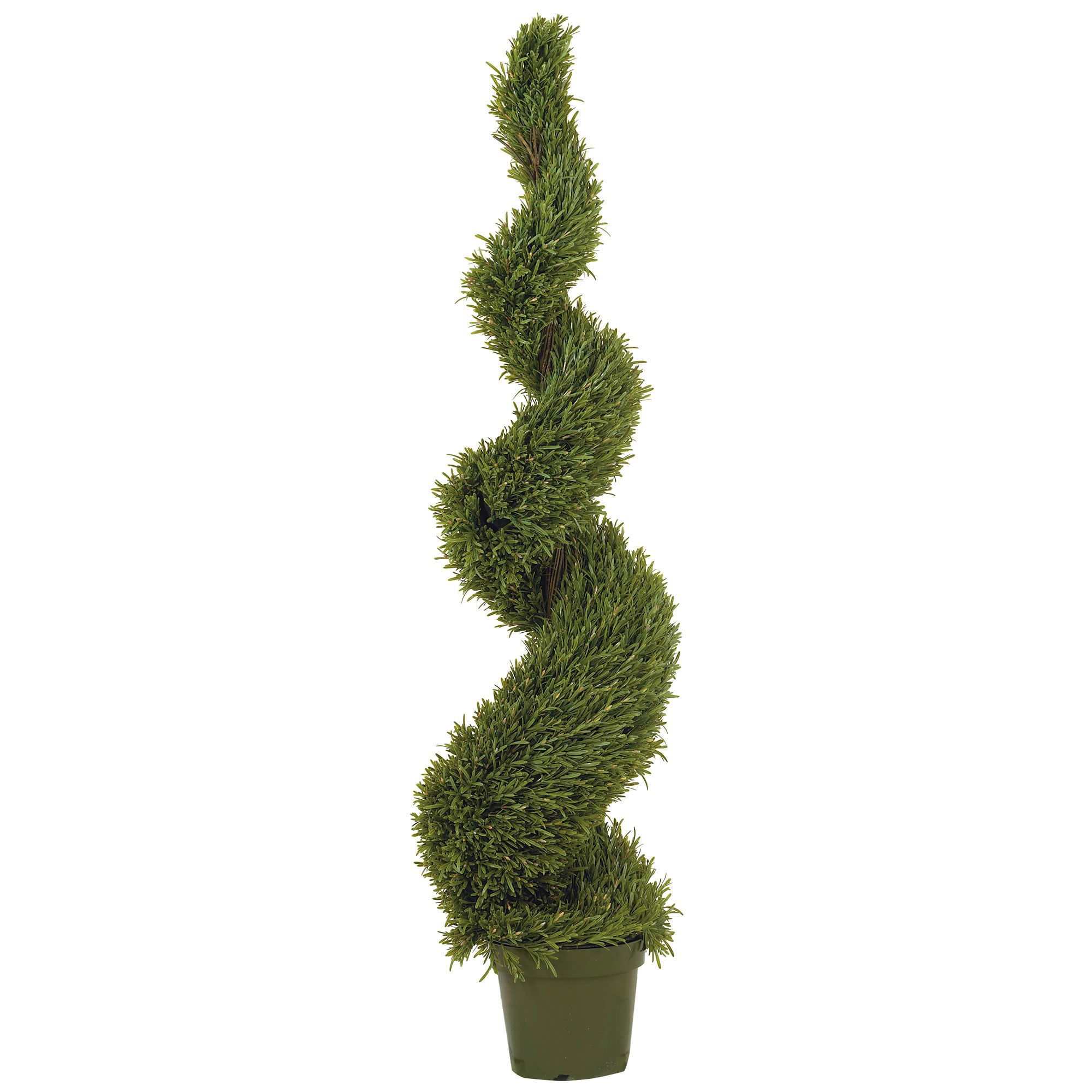 Creations of earth consulting u plant maintenanceu rosemary spiral