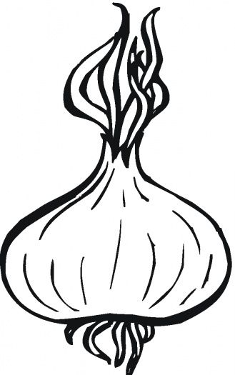 onion drawing vegetables Pinterest
