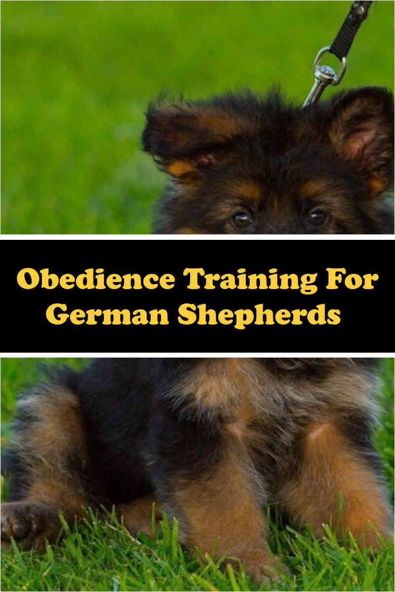 Are German Shepherds Good Family Pets With Images Dog Training German Shepherd Facts German Shepherd