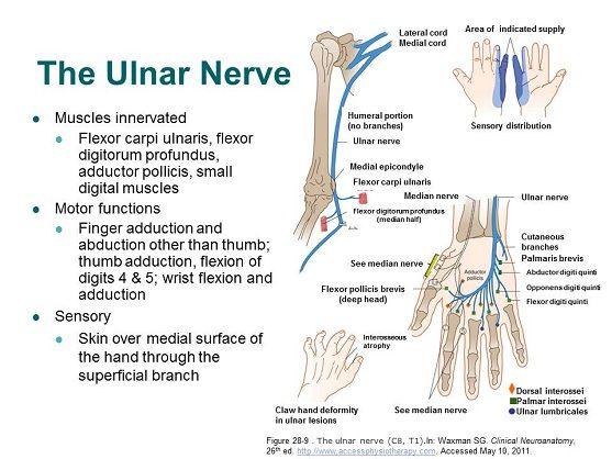 Electromyogram / Nerve Conduction Study (EMG/NCS ...