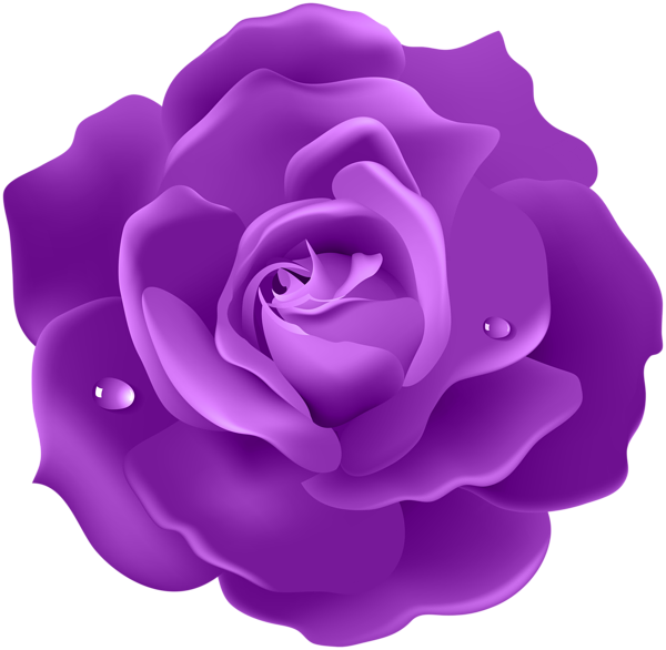 Purple Rose PNG Image (With images) Black roses