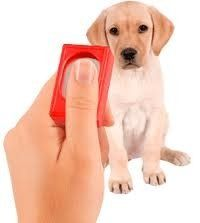 If You Desire To Teach Your Dog The Basic Commands The Clicker